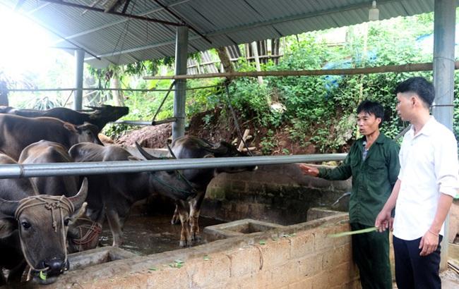 Động lực liên kết sản xuất, làm giàu của nông dân Yên Bái - Ảnh 1.