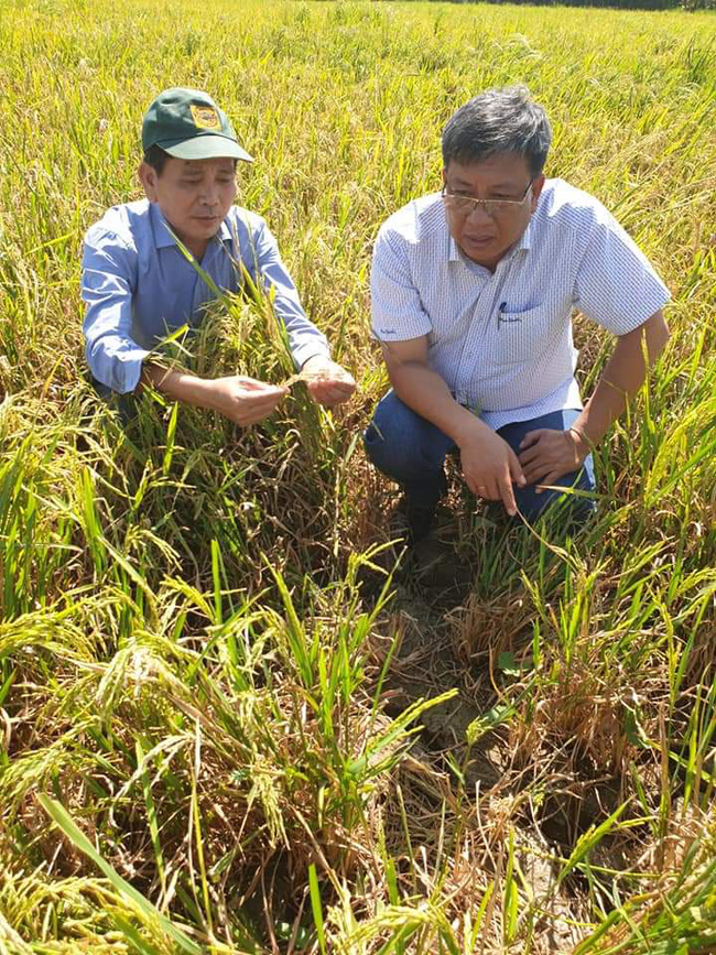 Hỗ trợ 80.000 nông hộ vượt khó do hạn mặn, dịch bệnh - Ảnh 4.