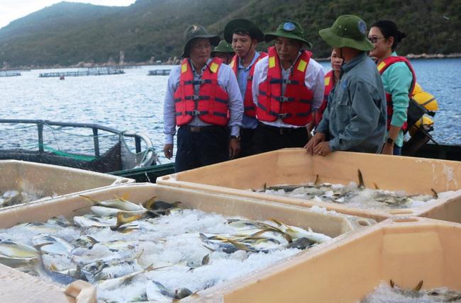 Xây dựng chiến lược phát triển thủy sản: Tăng đào tạo, tính chuyên nghiệp và liên kết  - Ảnh 1.