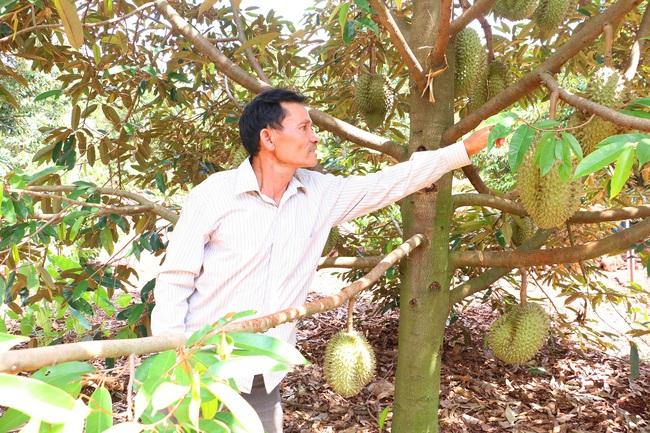 Chương trình OCOP huyện Chư Pưh (Gia Lai): Mở ra hướng đi bền vững cho nông sản - Ảnh 1.