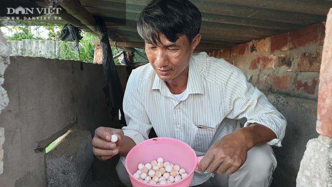 Nam Định: Nuôi đàn ba ba dưới ao, mỗi năm có vài trăm triệu - Ảnh 3.