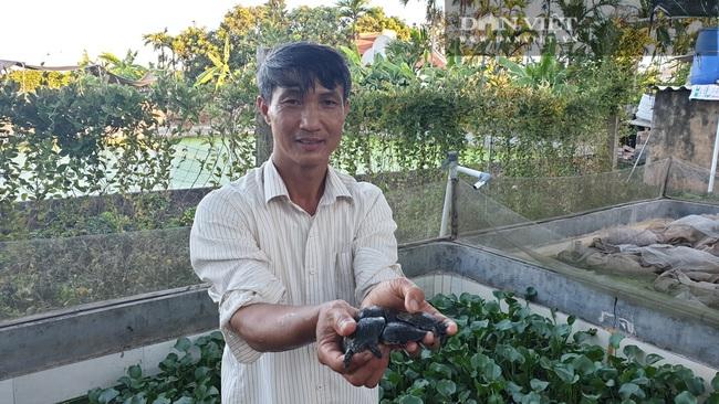 Nam Định: Nuôi đàn ba ba dưới ao, mỗi năm có vài trăm triệu - Ảnh 1.
