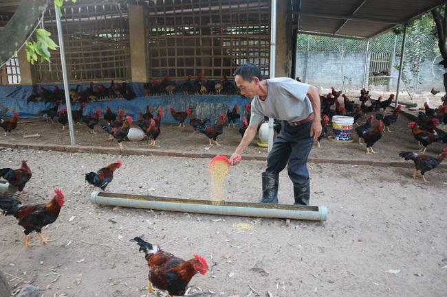 Giá gia cầm hôm nay 28/9: Giá gà thịt công nghiệp tiếp tục tăng, người nuôi lãi đậm - Ảnh 2.