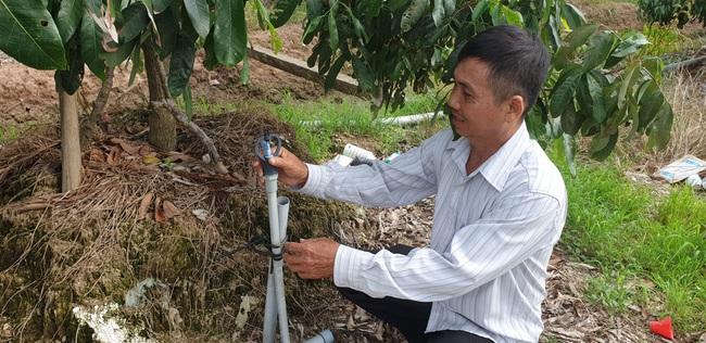 Trồng nhãn Ido, anh nông dân ở Bến Tre thu gần 2 tỷ đồng mỗi năm - Ảnh 2.