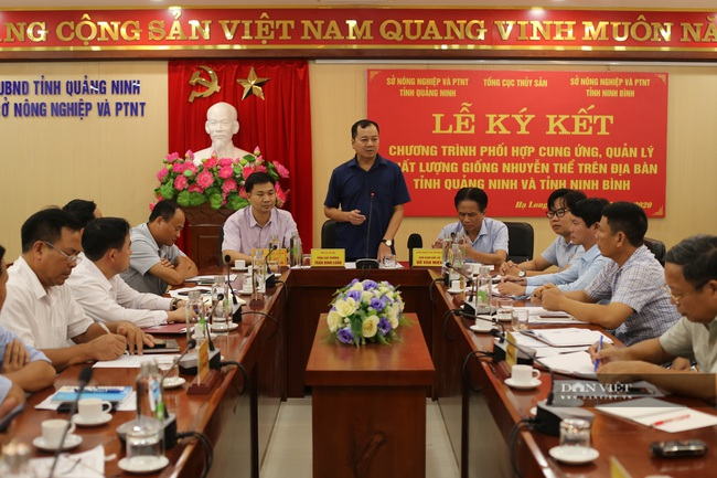 Ninh Bình sẽ cung ứng và quản lý chất lượng giống nhuyễn thể cho Quảng Ninh - Ảnh 1.