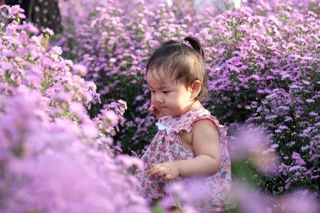 Mê mẩn vườn hoa thạch thảo được trồng đầu tiên tại Đà Nẵng - Ảnh 3.