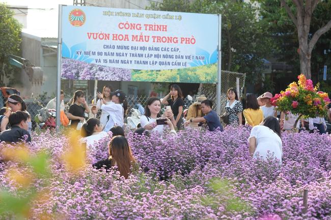 Mê mẩn vườn hoa thạch thảo được trồng đầu tiên tại Đà Nẵng - Ảnh 8.