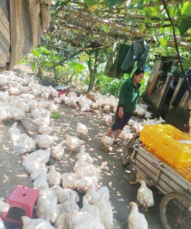 Giá gia cầm hôm nay 30/9: Giá gà thịt lông trắng bất ngờ giảm trên dưới 2.000 đồng/kg - Ảnh 1.