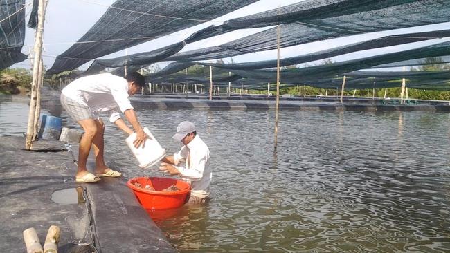 Xây công trình phụ trên đất nông nghiệp: UBND TP.HCM thống nhất cho thí điểm  - Ảnh 1.