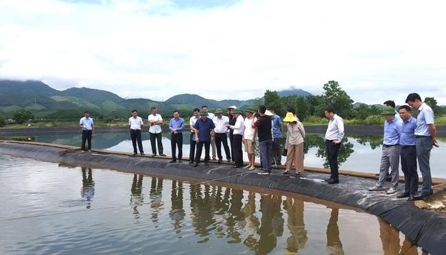 Kiểm tra các dự án khuyến nông T.Ư tại Quảng Ninh: Cây, con phát triển tốt, dự báo hiệu quả cao  - Ảnh 1.