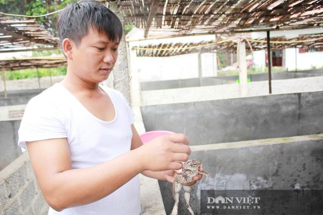 Nghệ An: Bỏ bục giảng, thầy giáo về nuôi ếch Thái Lan thu cả trăm triệu - Ảnh 3.
