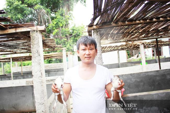 Nghệ An: Bỏ bục giảng, thầy giáo về nuôi ếch Thái Lan thu cả trăm triệu - Ảnh 1.