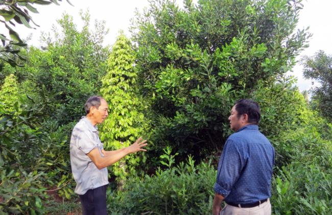 Nhìn lại 5 năm phát triển cây mắc ca ở Việt Nam - Ảnh 3.