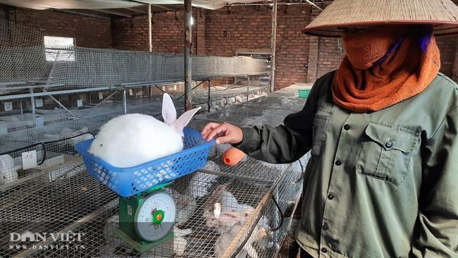 """Quảng Ninh: Nuôi đủ con không """"ra ngô ra khoai"""", đến loài lông trắng mắt đỏ thì lại khấm khá - Ảnh 5."""