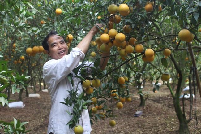 Tăng nguồn vốn vay, tăng hỗ trợ nông dân - Ảnh 3.