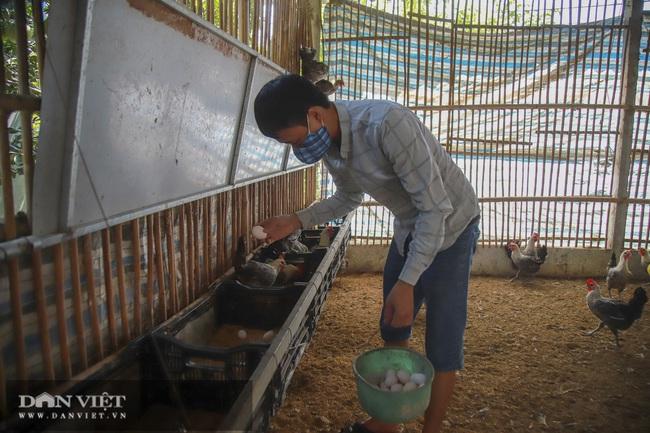 Hà Nội: 8X nuôi giống gà người Mỹ làm thú cưng, Việt Nam là món bổ dưỡng, lãi 500 triệu đồng/năm - Ảnh 2.