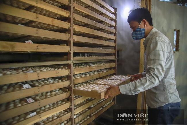 Hà Nội: 8X nuôi giống gà người Mỹ làm thú cưng, Việt Nam là món bổ dưỡng, lãi 500 triệu đồng/năm - Ảnh 3.