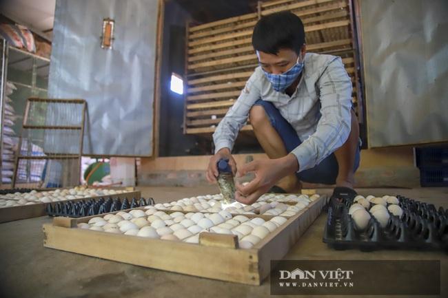 Hà Nội: 8X nuôi giống gà người Mỹ làm thú cưng, Việt Nam là món bổ dưỡng, lãi 500 triệu đồng/năm - Ảnh 5.