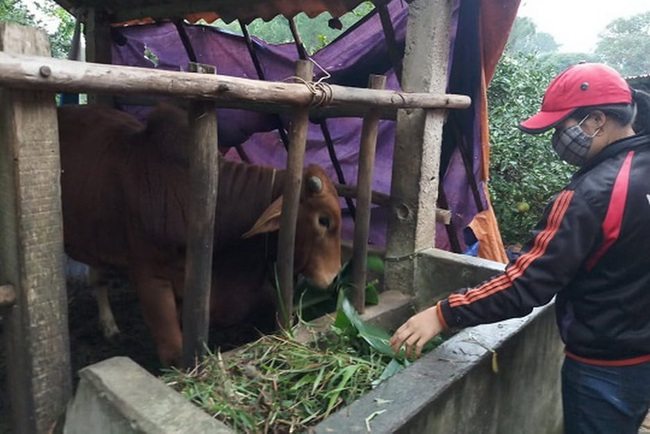 Quảng Trị: Rét đậm, một xã có hơn 80 con trâu, bò bị chết - Ảnh 1.