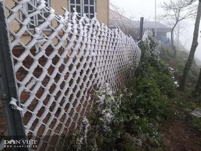 Ảnh: Băng tuyết xuất hiện trắng xóa trên đỉnh núi Tà Xùa - Ảnh 5.