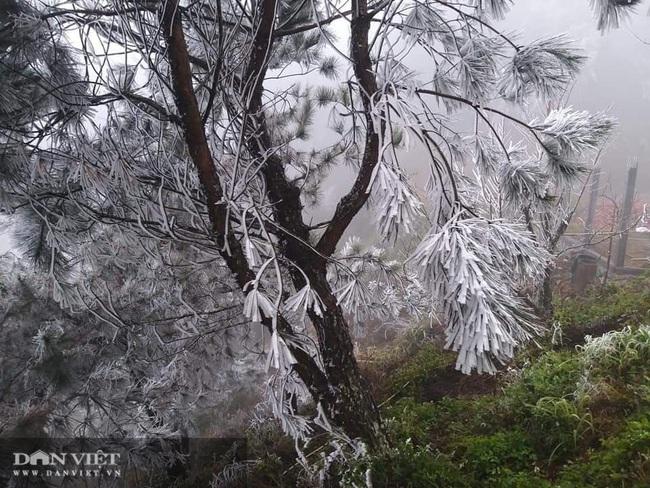 Ảnh: Băng tuyết xuất hiện trắng xóa trên đỉnh núi Tà Xùa - Ảnh 3.