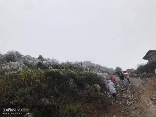 Ảnh: Băng tuyết xuất hiện trắng xóa trên đỉnh núi Tà Xùa - Ảnh 1.