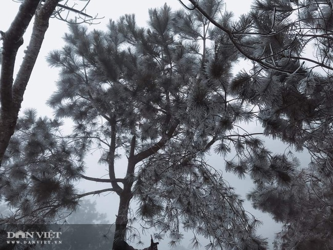 Ảnh: Băng tuyết xuất hiện trắng xóa trên đỉnh núi Tà Xùa - Ảnh 8.