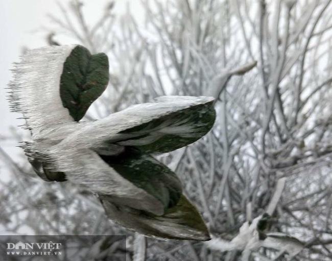 Ảnh: Băng tuyết xuất hiện trắng xóa trên đỉnh núi Tà Xùa - Ảnh 4.