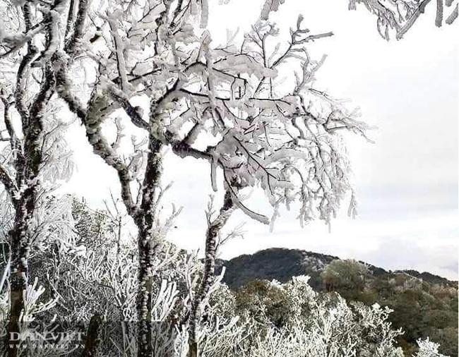 Ảnh: Băng tuyết xuất hiện trắng xóa trên đỉnh núi Tà Xùa - Ảnh 2.