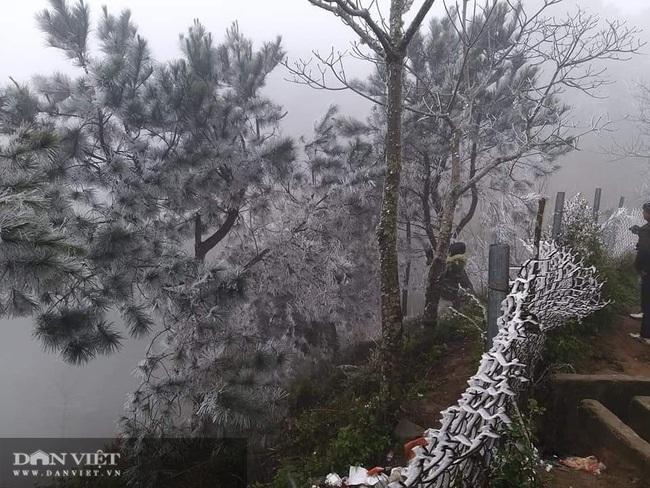 Ảnh: Băng tuyết xuất hiện trắng xóa trên đỉnh núi Tà Xùa - Ảnh 9.