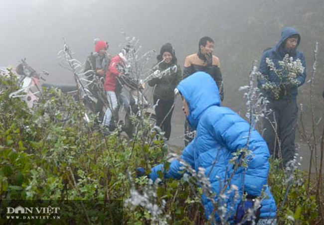 Ảnh: Băng tuyết xuất hiện trắng xóa trên đỉnh núi Tà Xùa - Ảnh 12.