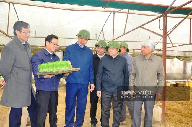 Phó Chủ tịch UBND tỉnh Thanh Hóa - Lê Đức Giang kiểm tra công tác chống rét cho cây trồng  - Ảnh 2.