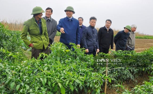 Phó Chủ tịch UBND tỉnh Thanh Hóa - Lê Đức Giang kiểm tra công tác chống rét cho cây trồng  - Ảnh 1.