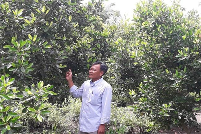 Hậu Giang: Trồng cây cà na Thái ra trái ăn lạ miệng, ông nông dân này bất ngờ giàu lên - Ảnh 1.