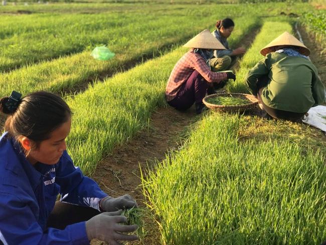 """Nghệ An:  Từ """"hai bàn tay trắng"""", bà chủ 8X đưa sản phẩm nông nghiệp hữu cơ ra thị trường thế giới - Ảnh 1."""