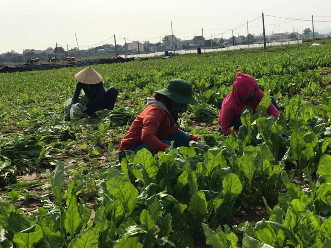 """Nghệ An:  Từ """"hai bàn tay trắng"""", bà chủ 8X đưa sản phẩm nông nghiệp hữu cơ ra thị trường thế giới - Ảnh 2."""