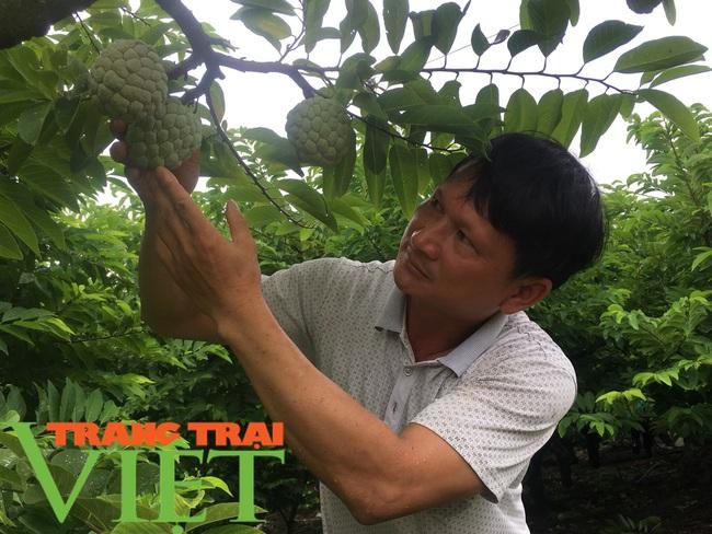Nông dân Mai Sơn làm giàu bằng cây ăn quả trên đất dốc - Ảnh 1.