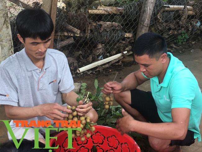 Nông dân Mai Sơn làm giàu bằng cây ăn quả trên đất dốc - Ảnh 5.