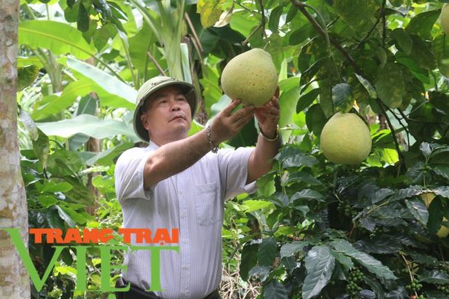 Nông dân Mai Sơn làm giàu bằng cây ăn quả trên đất dốc - Ảnh 4.