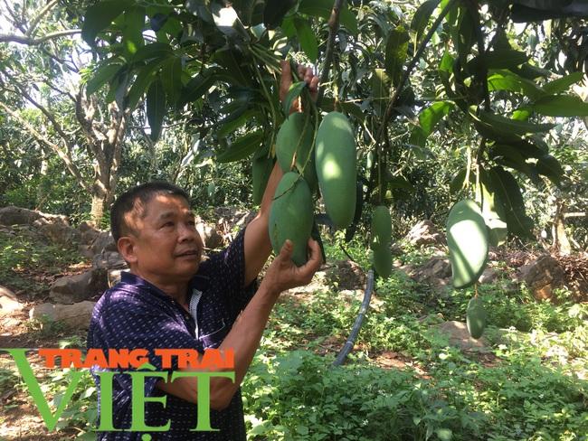 Nông dân Mai Sơn làm giàu bằng cây ăn quả trên đất dốc - Ảnh 3.