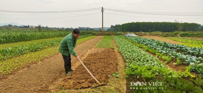 Nông dân Hà Tĩnh tất bật chăm sóc rau xanh đón Tết  - Ảnh 3.