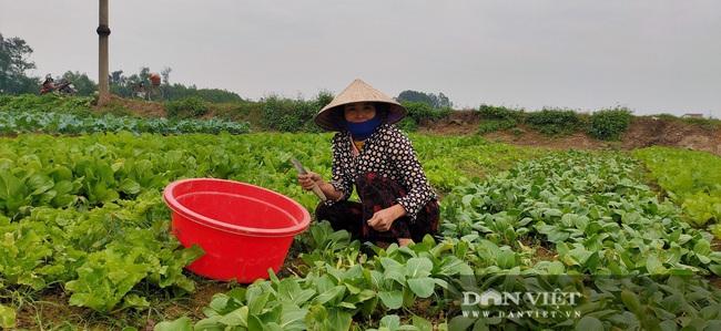 Nông dân Hà Tĩnh tất bật chăm sóc rau xanh đón Tết  - Ảnh 4.