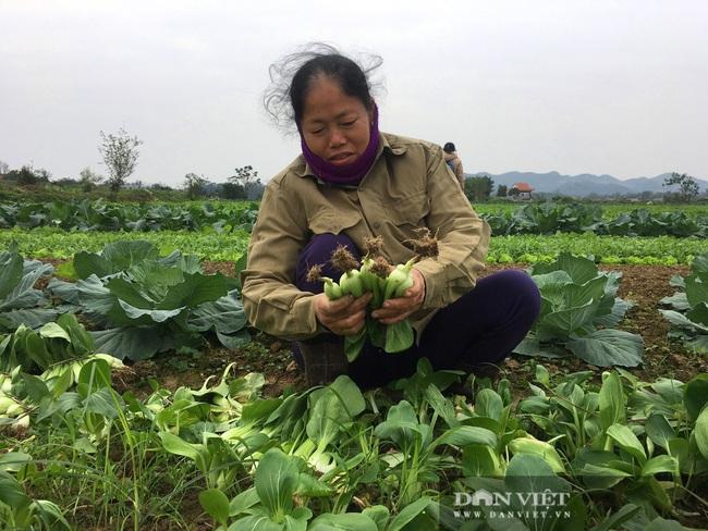 Nông dân Hà Tĩnh tất bật chăm sóc rau xanh đón Tết  - Ảnh 1.
