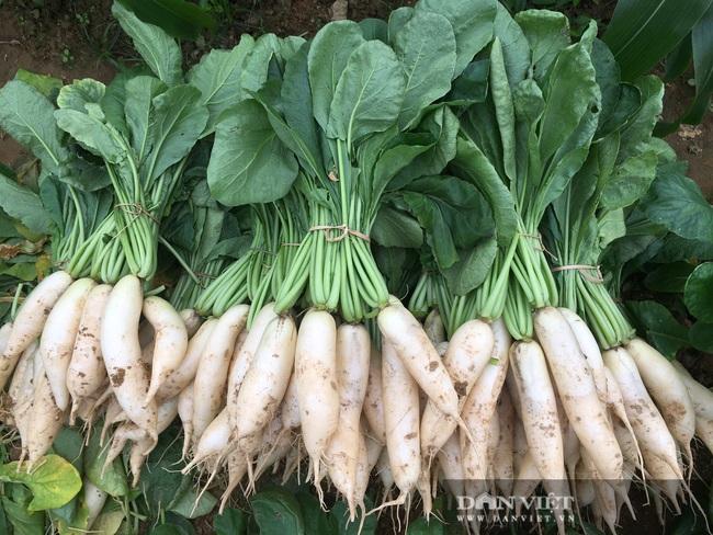 Nông dân Hà Tĩnh tất bật chăm sóc rau xanh đón Tết  - Ảnh 5.