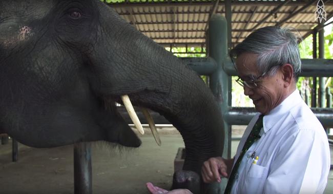 Câu chuyện cảm động về Mosha, nàng voi thiếu một chân - Ảnh 2.