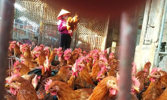 Giá gia cầm hôm nay 15/1: Dự báo giá gà, vịt dịp Tết Nguyên đán Tân Sửu 2021 - Ảnh 3.