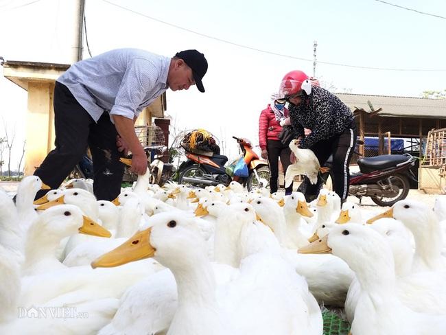 Giá gia cầm hôm nay 15/1: Dự báo giá gà, vịt dịp Tết Nguyên đán Tân Sửu 2021 - Ảnh 1.
