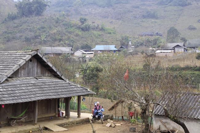 Sơn La đề nghị Bộ NNPTNT hướng dẫn xác nhận cây đào trồng trên vườn nhà như thế nào? - Ảnh 3.