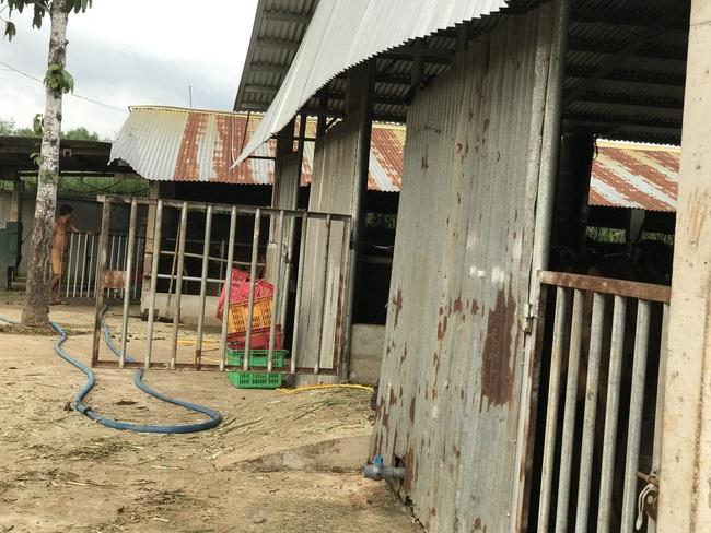 """Cận cảnh trang trại nuôi bò """"khủng"""" lấy phân giúp nông dân Đồng Nai lời 1 tỷ mỗi năm - Ảnh 10."""