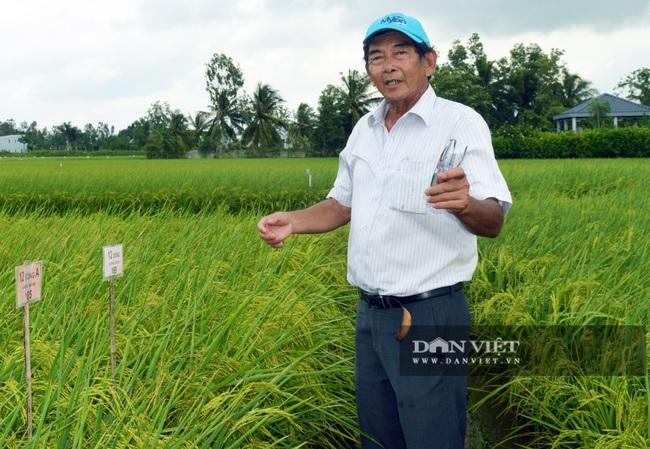 Cha đẻ gạo ngon nhất thế giới 2019 – Hồ Quang Cua nói về gạo ST25 bán tràn lan, thật giả lẫn lộn? - Ảnh 1.